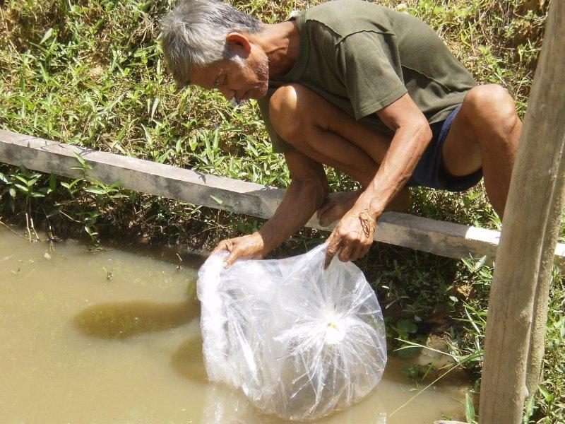 Regenerating Fish Harvests in Cambodian Villages