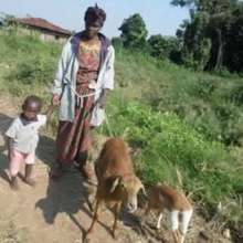 Raped Single mother with 2 sheep and her child