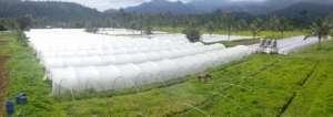 Agricultural Restoration