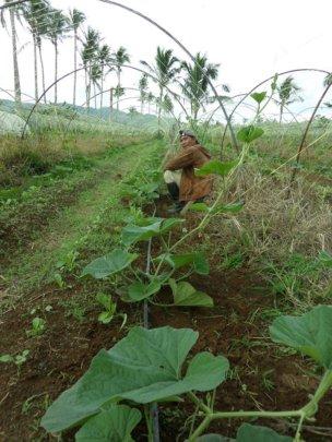 Philippine Agricultural Economic Restoration