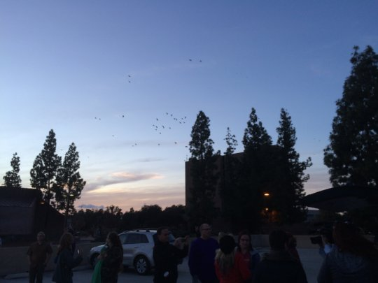 The existing flock flying overhead