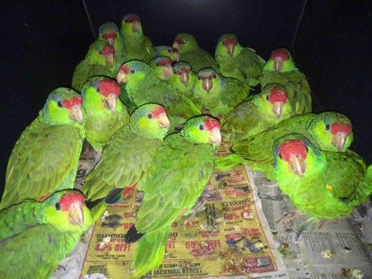 Microchipped flock