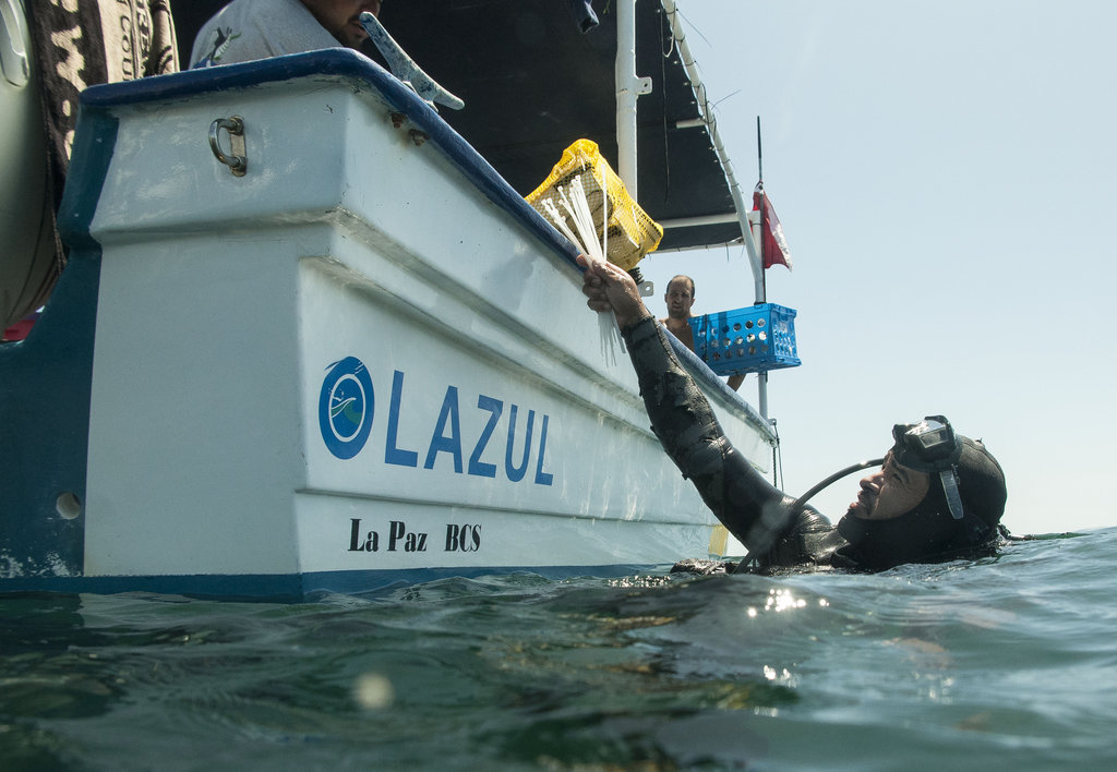 Help Mexican Artisanal Fishers Prevent Dive Injury