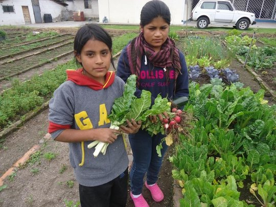 Kevin & His Classmate Pick Nutritious Vegetables