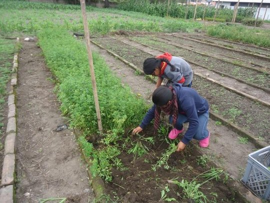 Kevin & His Classmate Work Hard in the Gardens