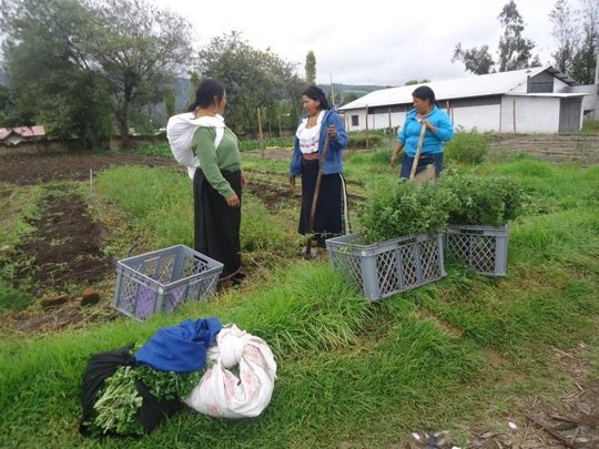 Kevin's Family and Neighbors Collect Their Harvest