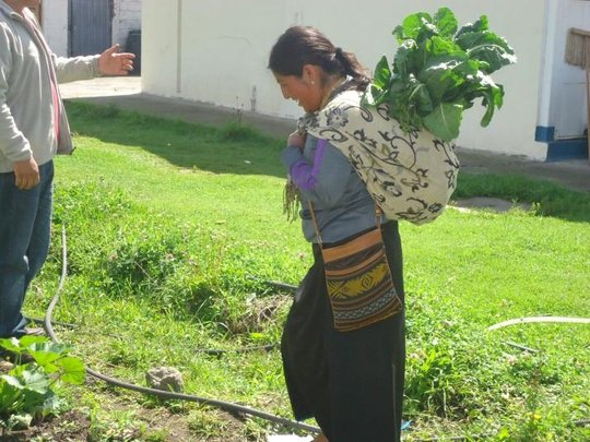 Woman Happily Harvests A Bounteous Crop