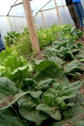 Thriving produce in Ecuador greenhouses.