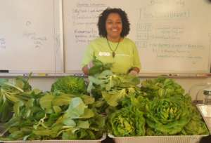 The best lettuce in town. Classroom grown.