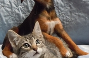 TX No-Kill Shelter Care for Abandoned Dogs & Cats
