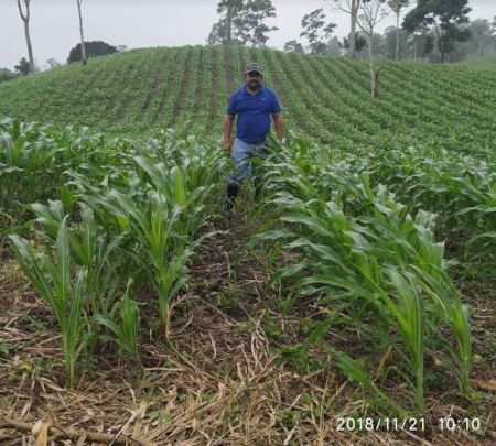 Co-op member, Ariel, in his maize field.