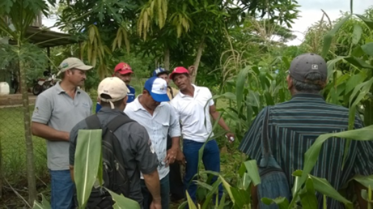 Farmers learn about QPM at the experimental plot