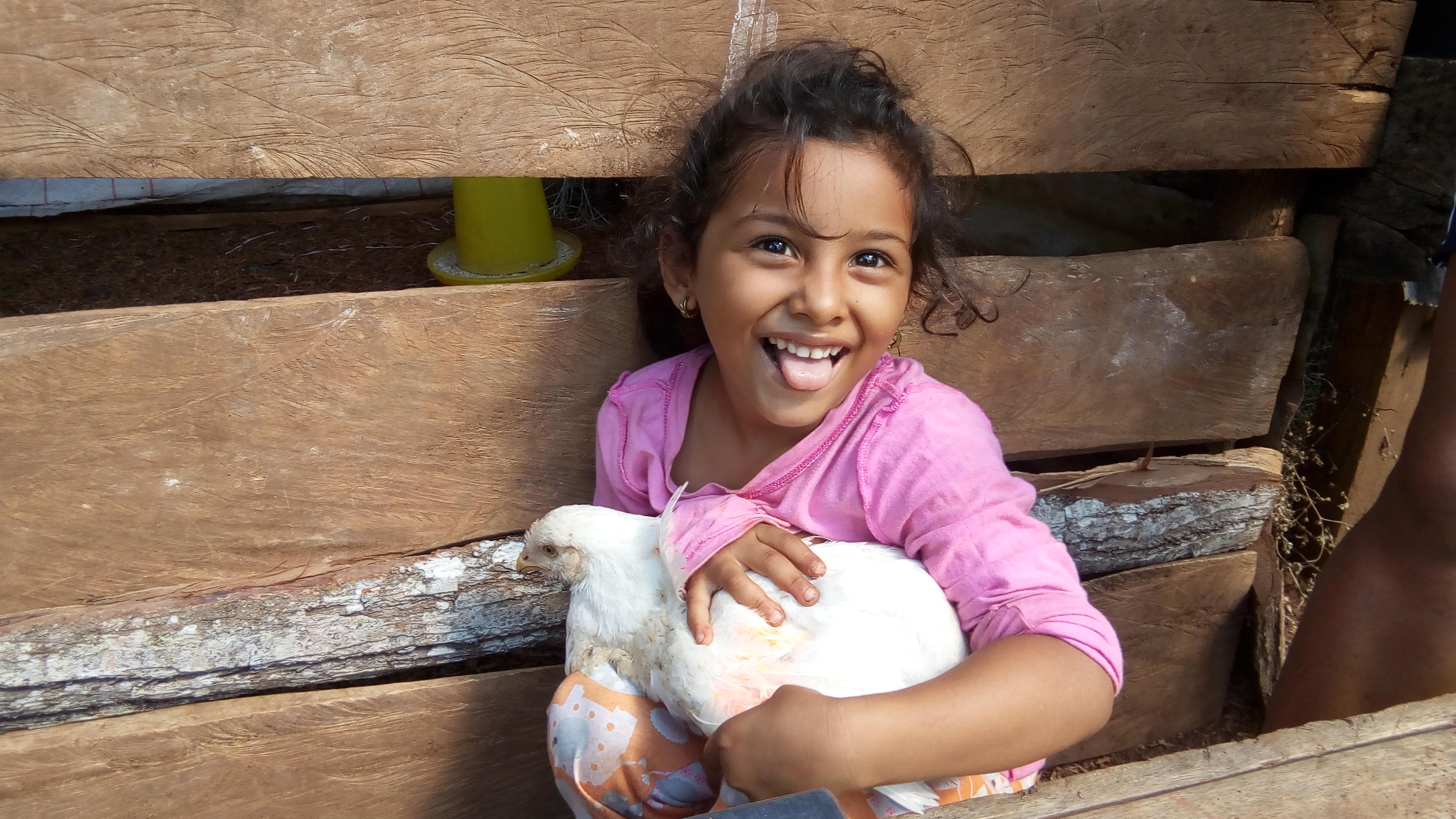 Young Nicaraguan Poultry Producers Prove the Value of Quality Protein Maize