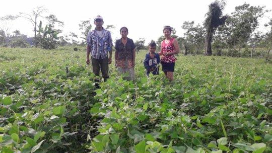 Farming family's bean crop.