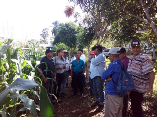 Introducing Double Row Corn Technology to Nicaragua's Farmers