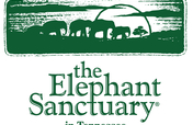 Sustain elephants retired from zoos and circuses