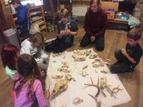 Studying the different skulls