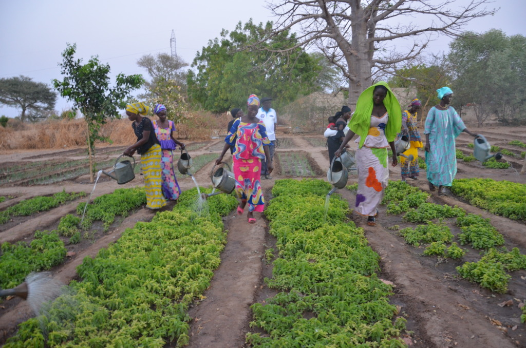 Watering the garden to ensure a good harvest