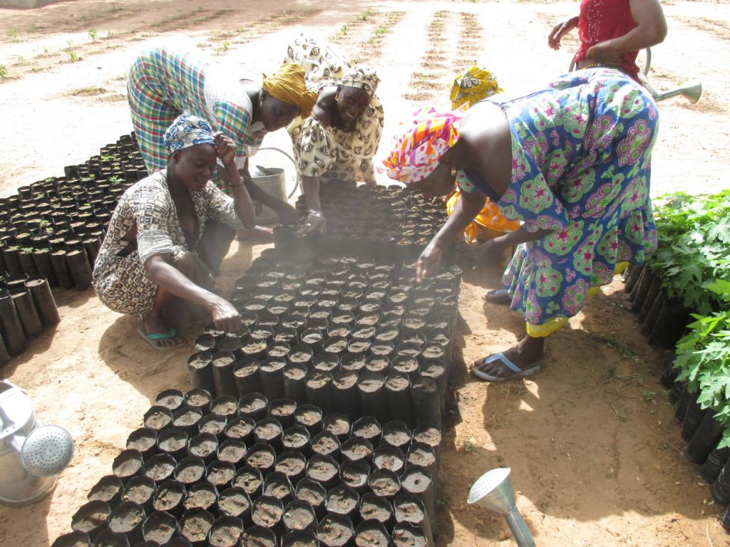 "Women in Diabel sowing seeds in ""sachets"""
