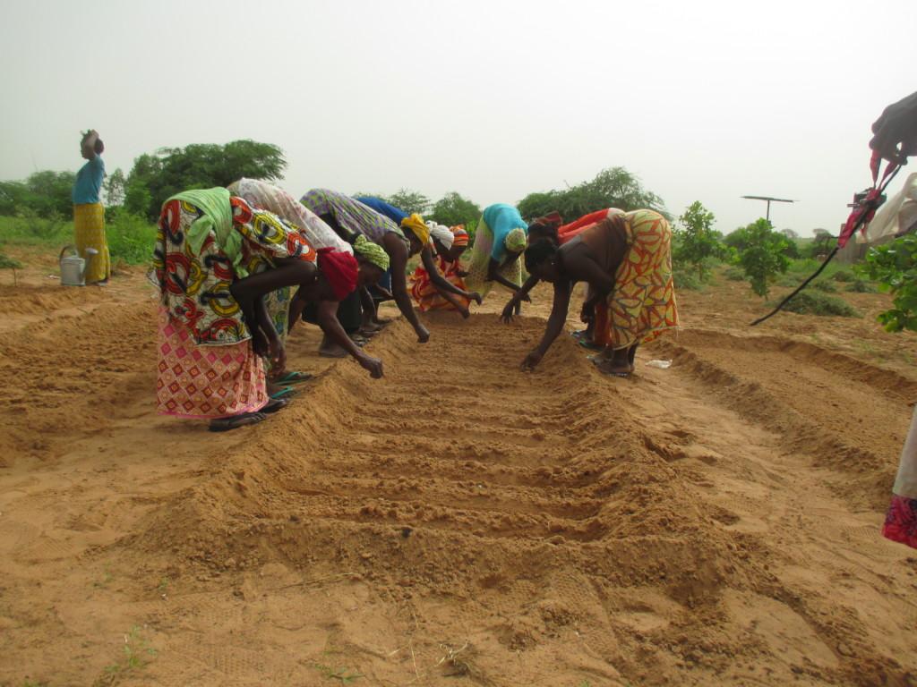 Women in Santhie planting seeds