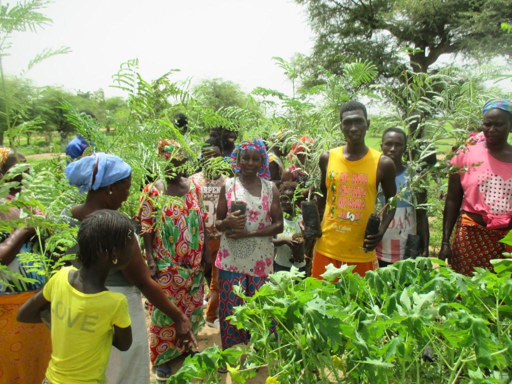 Men and women in Wereyane planting trees
