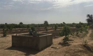 Thriving garden in Darou Diadji