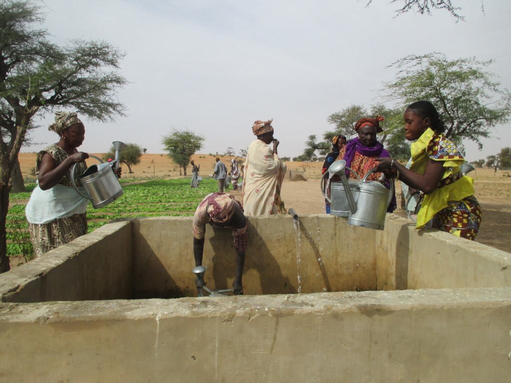 Women getting water from basins to irrigate garden