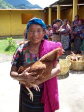 Plan Pollo helps the elderly with daily eggs