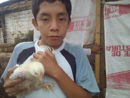 Earning chickens for the grandparents