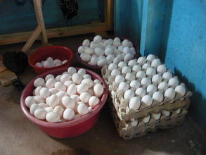 Eggs from Plan Pollo