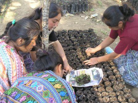 Preparing seeds