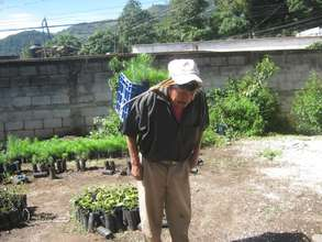 Ancianos involved in reforestation