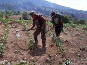 Tilling the fields