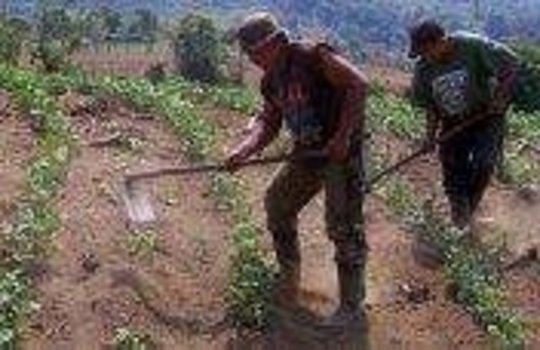 Help feed 1000 Indigenous People in Honduras