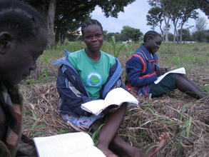Students study in the shade