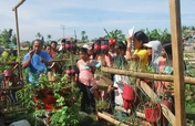 Typhoon Haiyan Bunk-houses Gardening Initiative