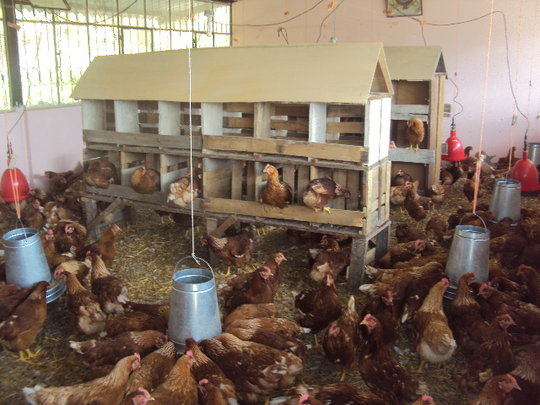 Old classrooms now converted into an egg business