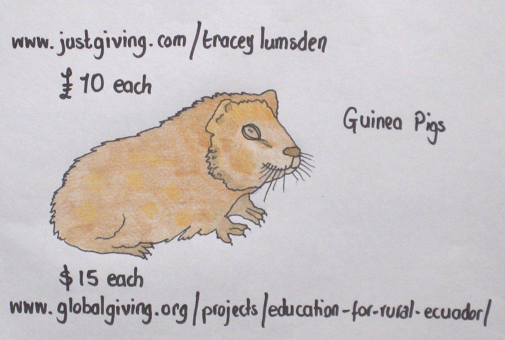 Buy a Guinea Pig!