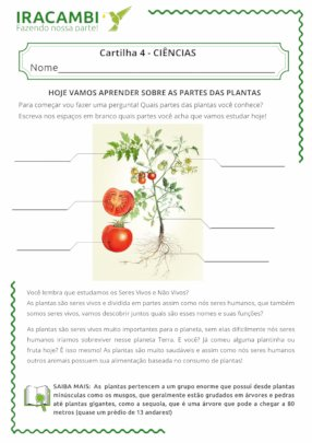 Our leaflet about naming the parts of a plant