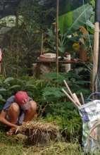Studying rainforest soils