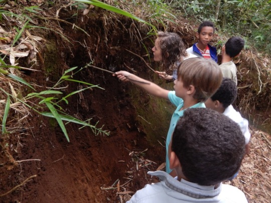 Observation of insects in soil