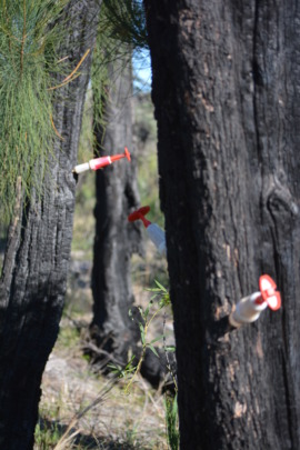 Tree dieback protection for Cockatoo