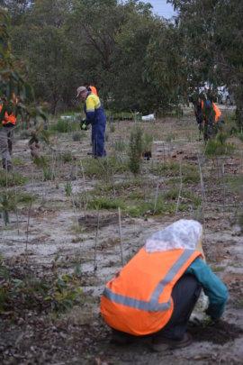 Essential tree planting for Cockatoo habitat