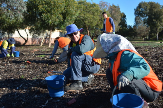 Planting in a prepared site