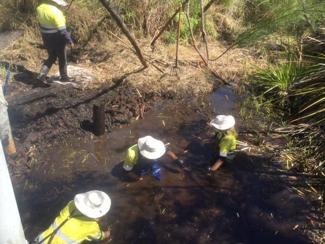 Volunteers clearing strangled creek of typha weed
