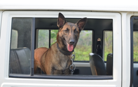 Babli in the new vehicle