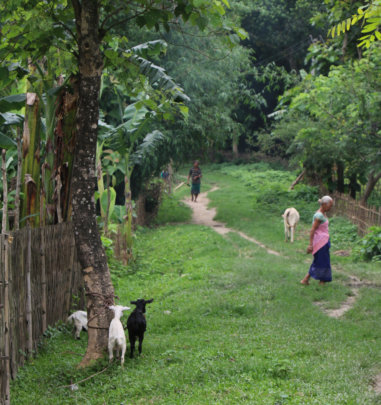 Goats as part of the Karbi Tribe programme