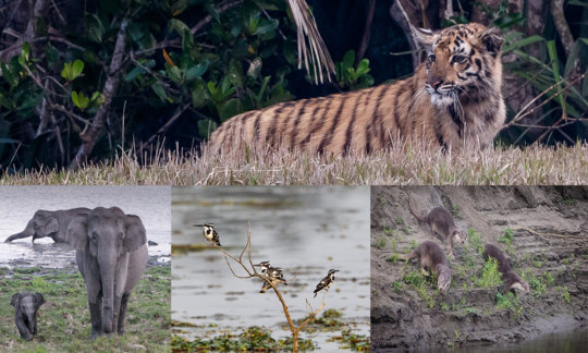 The precious biodiversity that we work to protect