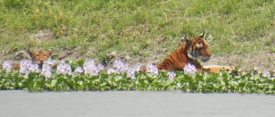 Mother and cub cooling off