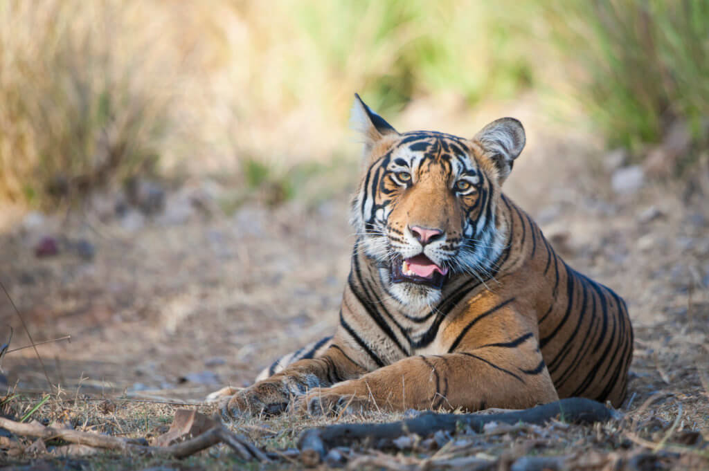Image credit: Arkaprava Ghosh